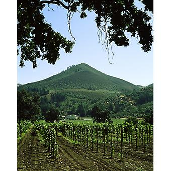 Vignoble au Château St Jean Winery Kenwood Sonoma County en Californie USA Poster Print