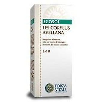 Forza Vitale Hazel Corylus Avellana Les 50Ml. (Herbalist's , Natural extracts)
