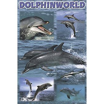 Poster - Studio B - 24x36 Dolphinworld Wall Art CJ3401D