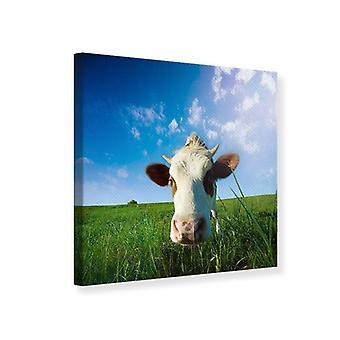 Leinwand drucken die Kuh