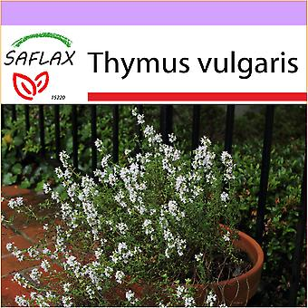 Saflax - 200 seeds - Common Thyme - Thym commun - Timo comune - Tomillo - Echter Thymian