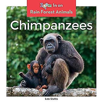 Chimpanzees (Rain Forest Animals)