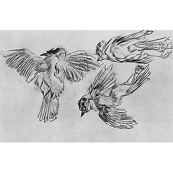 Vincent Van Gogh - Studies of a Dead Sparrow, 1885 Poster Print Giclee