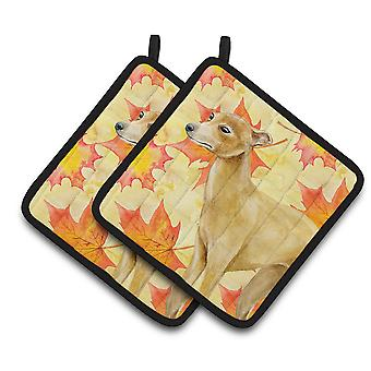 Carolines Treasures  BB9959PTHD Italian Greyhound Fall Pair of Pot Holders
