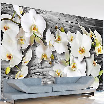 Wallpaper - Callous orchids III