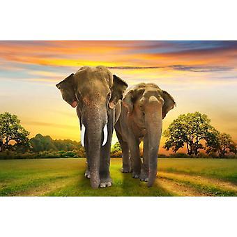 Papier peint mural éléphants famille