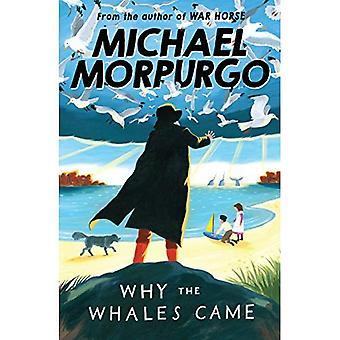 Pourquoi les baleines venus