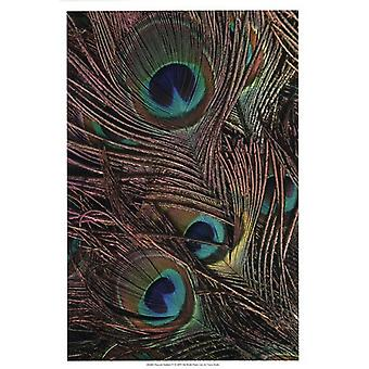 Peacock Feathers IV Poster Print by Vision studio (13 x 19)