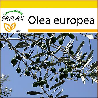 Saflax - Potting Set - 20 seeds - Common Olive - Olivier - Olivo - Olivo - Ölbaum