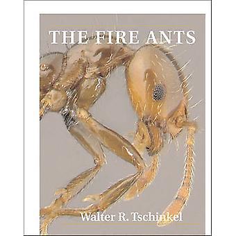 As formigas de fogo por Walter R. Tschinkel - 9780674072404 livro