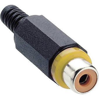 Lumberg XKTO 1 RCA-connector aansluiting, rechte aantal pins: 2 gele 1 PC('s)