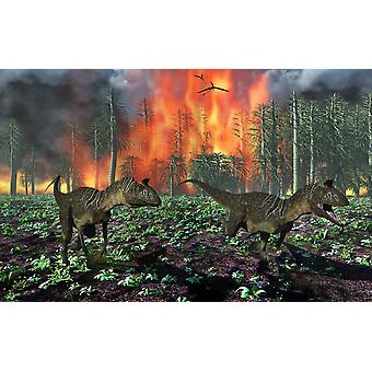 Cryolophosaurus dinosaurs fleeing from a deadly forest fire Poster Print