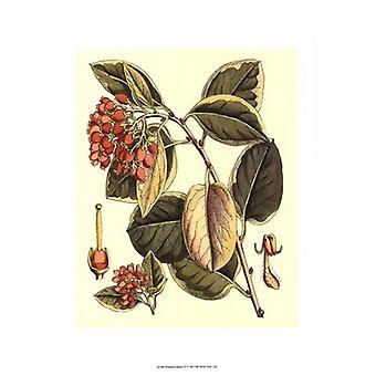 Botanical Fantasy IV Poster Print (13 x 19)