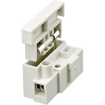 Lustre terminal flexible: 2.5-4 mm² rigid: 2.5-4 mm² Number of pins: 1 Adels-Contact 900 SI/1 1 pc(s) White