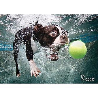 Underwater Rocco Jigsaw Puzzle (1000 Pieces)