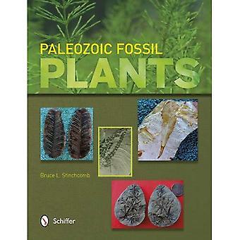 Paläozoischen fossilen Pflanzen