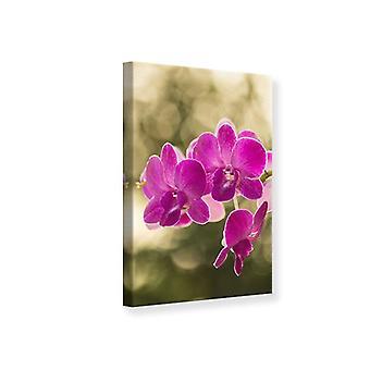 Canvas Print Orchids Violet