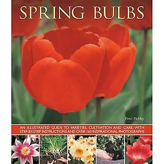 Vårens lökar: En illustrerad Guide till sorter, odling och vård, med stegvisa instruktioner och över...