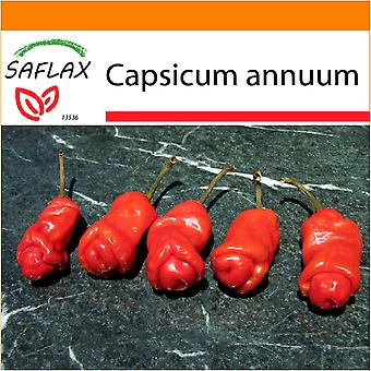 Saflax - Garden in the Bag - 10 seeds - Chili - Peter Peppers Penis Chili - Piment - Peter Peppers Pénis Chili - Peperoncino Peter Peppers Penis - Pimientas de chile Peter en forma de pene - Chili - Peter Peppers Penis Chili
