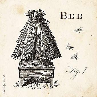 Abeille ruche Fig 7 Poster Print de Gwendolyn Babbitt