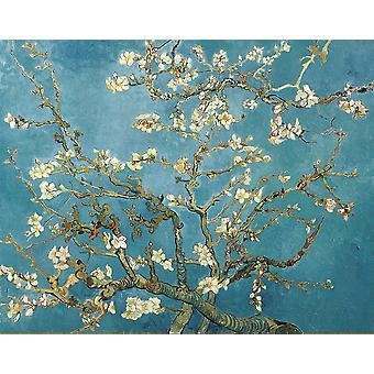 Vincent Van Gogh - Branches with Almond Blossom, 1890 Poster Print Giclee
