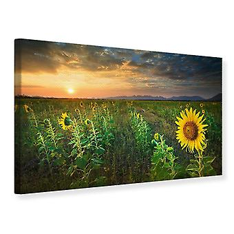 Canvas Print Sunflower Field At Sunset