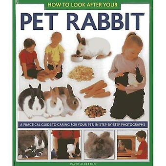 How to Look After Your Pet Rabbit: A Practical Guide to Caring for Your Pet, in Step-by-step Photographs