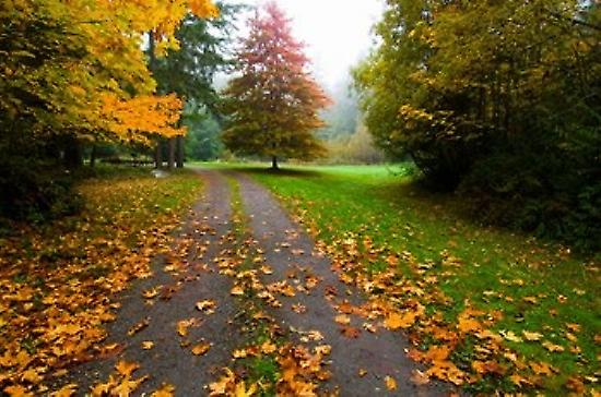 Fallen leaves on a road Washington State USA Poster Print by Panoramic Images (36 x 24)