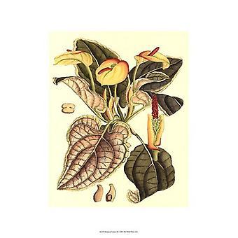 Botanical Fantasy III Poster Print (13 x 19)