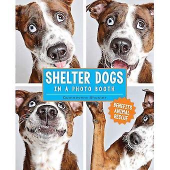 Refugio de perros en una cabina de fotos