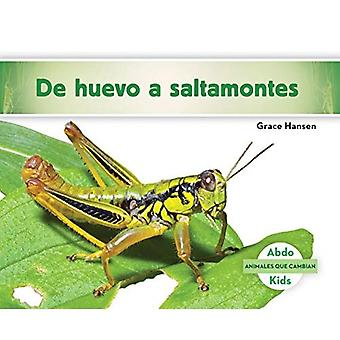de Huevo a Saltamontes (Becoming a Grasshopper ) (Animales Que Cambian (Changing Animals))