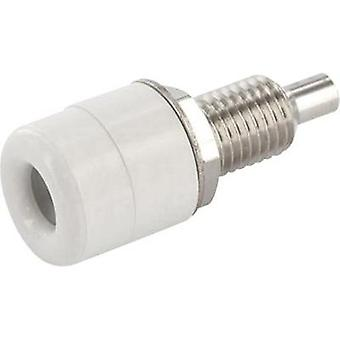Jack socket Socket, vertical vertical Pin diameter: 4 mm White econ connect TB4WS 1 pc(s)