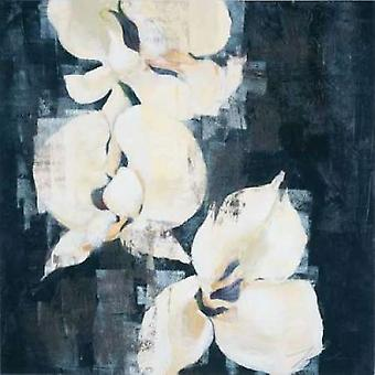 Shadow Orchids II Poster Print by Liz Jardine