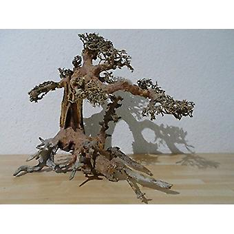 SuperFish naturale legno Bonsai Aquarium Decor Driftwood grande
