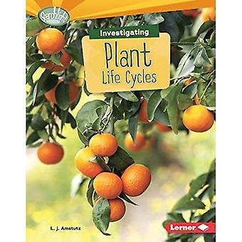 Utredande växt livscykler (Searchlight böcker vad är jordens cykler?)