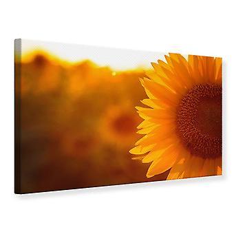 Canvas Print Macro Sunflower