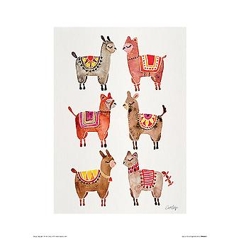 Alpaca art print cat Coquillette small format