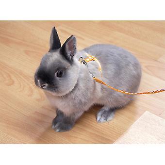 Alternativ för små djur sele & Lead Set tass skriva ut Asstd små (2 Pack)