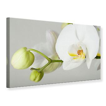 Lærred Print gigant orkidé