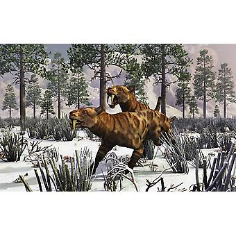 Пара Sabre-Toothed Тигры охота в снегу покрыты плейстоцена зимний пейзаж печать плаката