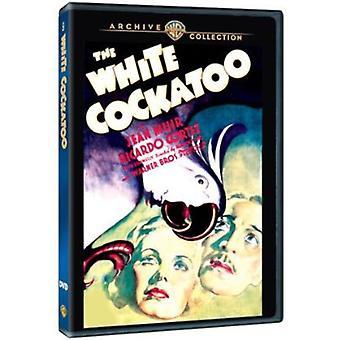 Cacatua-branca (1935) [DVD] EUA importar