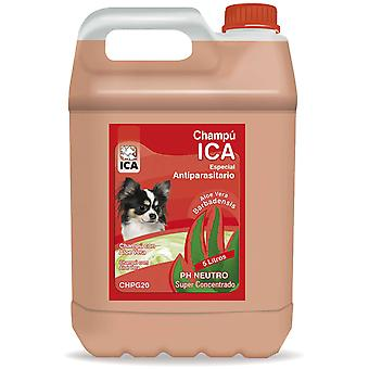 Ica Champ? Antipar?sitos 5Lt Aloe (Dogs , Grooming & Wellbeing , Shampoos)