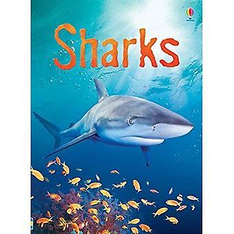 Rekiny (Usborne początkujących)