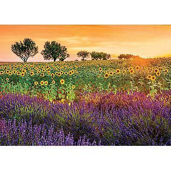 Educa gebied van zonnebloemen en lavendel Jigsaw puzzel (1500 stuks)