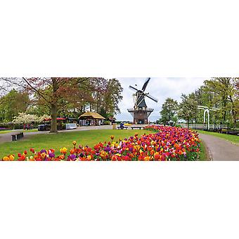 Jumbo De Keukenhof Holland Panoramic Premium Jigsaw (1000 Pieces)