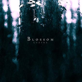 Glans - Blossom [CD] USA importerer