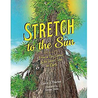 Étirement au soleil: d'une minuscule pousse à l'arbre le plus haut sur la terre
