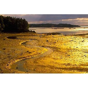 Marea en la puesta de sol en Isla de Campobello Poster Print por Julie Eggers