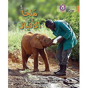 Collins Big Cat Arabic - Elephant sanctuary: Level 12