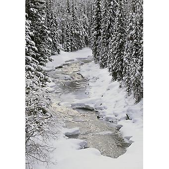 PosterPrint North Saskatchewan River Banff Nationalpark Alberta Kanada